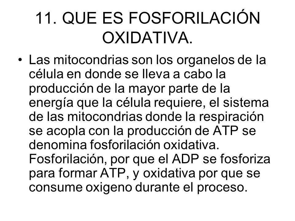 11. QUE ES FOSFORILACIÓN OXIDATIVA. Las mitocondrias son los organelos de la célula en donde se lleva a cabo la producción de la mayor parte de la ene