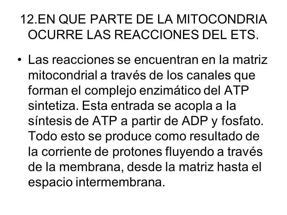 12.EN QUE PARTE DE LA MITOCONDRIA OCURRE LAS REACCIONES DEL ETS. Las reacciones se encuentran en la matriz mitocondrial a través de los canales que fo