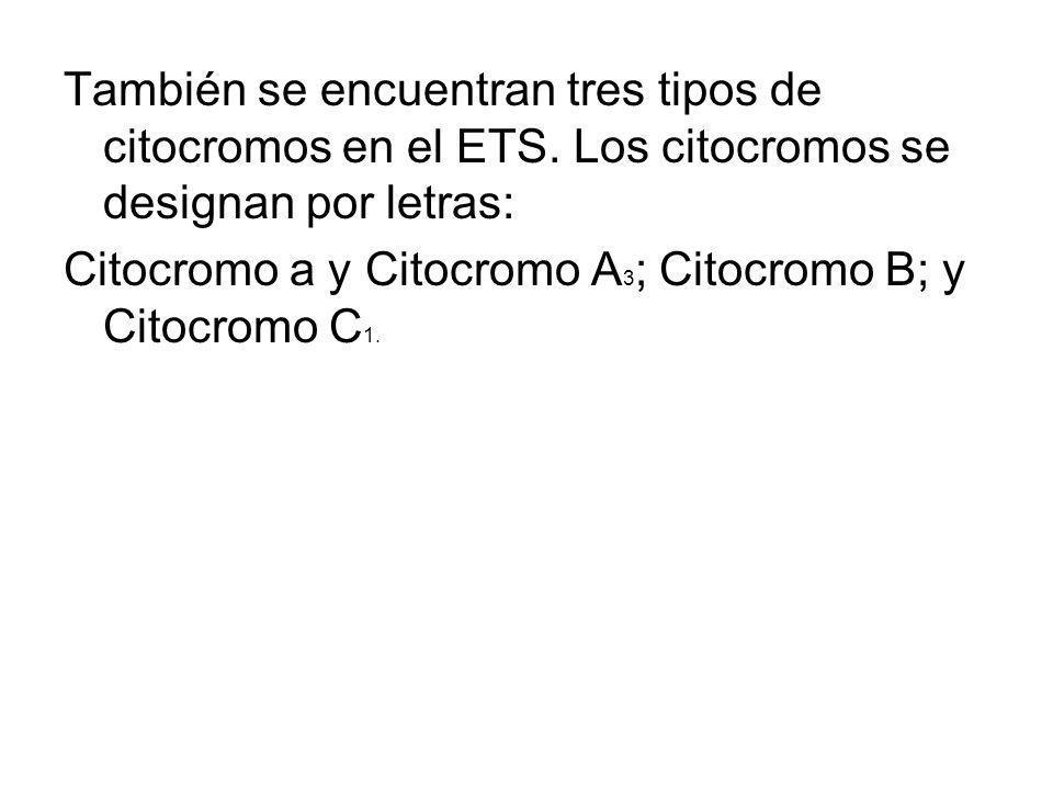 También se encuentran tres tipos de citocromos en el ETS. Los citocromos se designan por letras: Citocromo a y Citocromo A 3 ; Citocromo B; y Citocrom