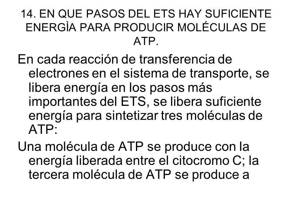 14. EN QUE PASOS DEL ETS HAY SUFICIENTE ENERGÌA PARA PRODUCIR MOLÉCULAS DE ATP. En cada reacción de transferencia de electrones en el sistema de trans