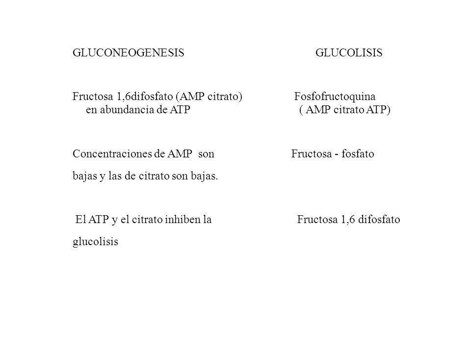 GLUCONEOGENESIS GLUCOLISIS Fructosa 1,6difosfato (AMP citrato) Fosfofructoquina en abundancia de ATP ( AMP citrato ATP) Concentraciones de AMP son Fru