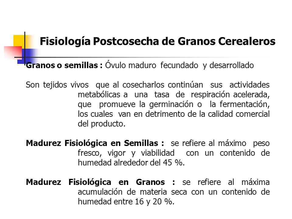 Fisiología Postcosecha de Granos Cerealeros Granos o semillas : Óvulo maduro fecundado y desarrollado Son tejidos vivos que al cosecharlos continúan s