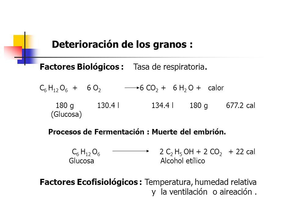 Deterioración de los granos : Factores Biológicos : Tasa de respiratoria. C 6 H 12 O 6 + 6 O 2 6 CO 2 + 6 H 2 O + calor 180 g 130.4 l 134.4 l 180 g 67