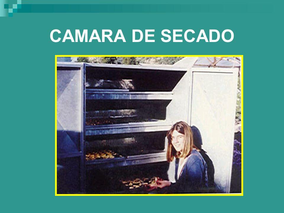 CAMARA DE SECADO