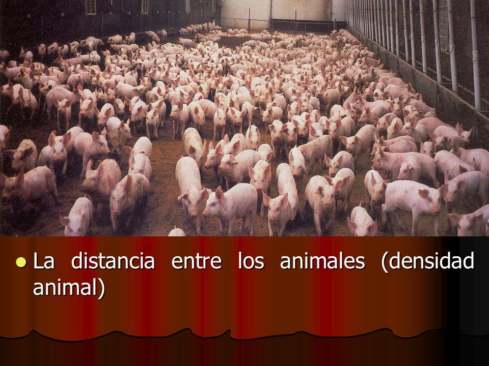 La distancia entre los animales (densidad animal) La distancia entre los animales (densidad animal)