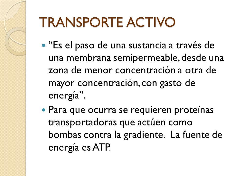 Bomba sodio potasio Juega un papel importante en la producción y transmisión del impulso nervioso.
