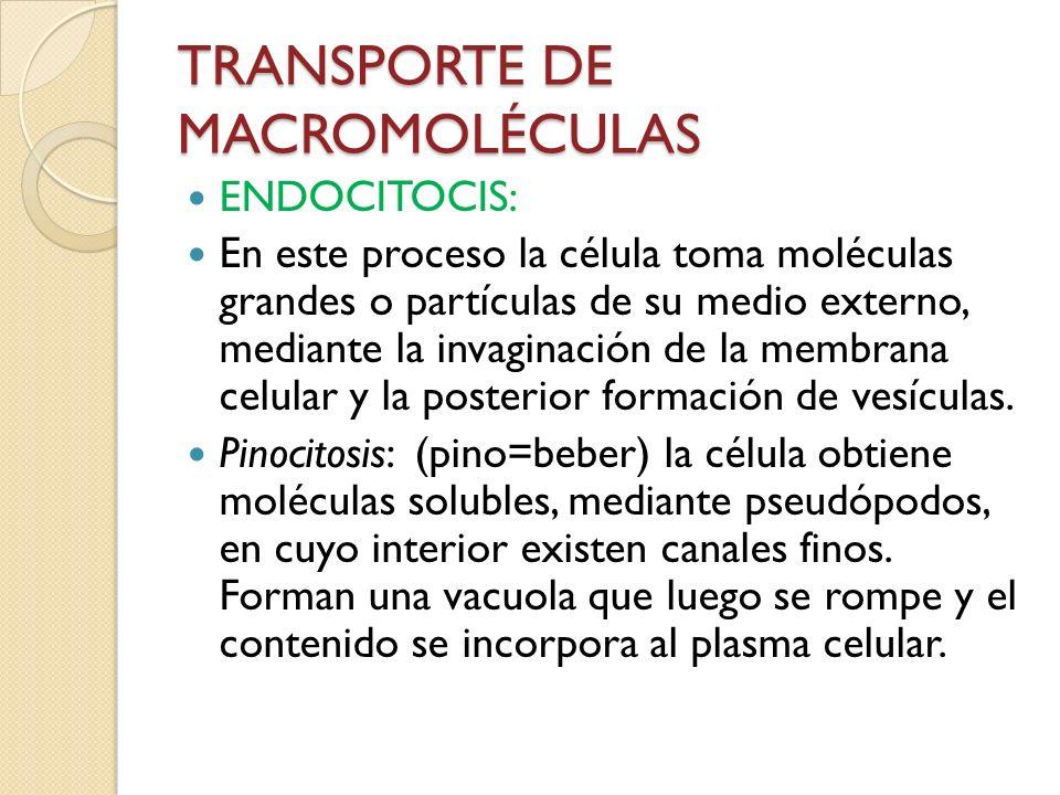 TRANSPORTE DE MACROMOLÉCULAS ENDOCITOCIS: En este proceso la célula toma moléculas grandes o partículas de su medio externo, mediante la invaginación