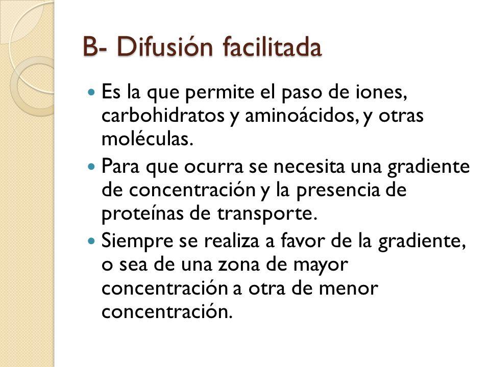 B- Difusión facilitada Es la que permite el paso de iones, carbohidratos y aminoácidos, y otras moléculas. Para que ocurra se necesita una gradiente d