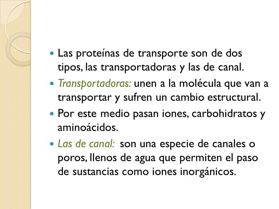 Las proteínas de transporte son de dos tipos, las transportadoras y las de canal. Transportadoras: unen a la molécula que van a transportar y sufren u