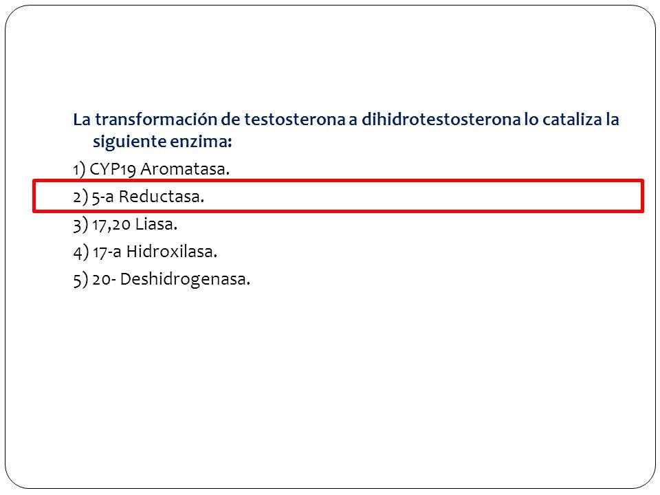 La transformación de testosterona a dihidrotestosterona lo cataliza la siguiente enzima: 1) CYP19 Aromatasa. 2) 5-a Reductasa. 3) 17,20 Liasa. 4) 17-a