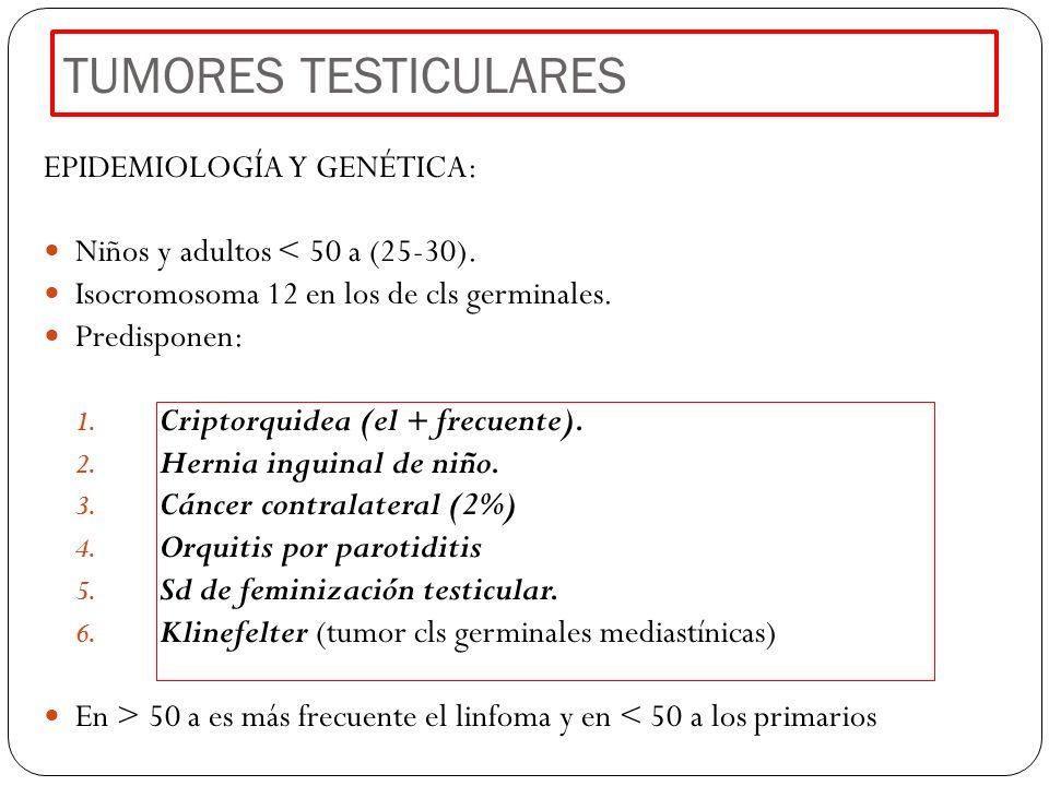 TUMORES TESTICULARES EPIDEMIOLOGÍA Y GENÉTICA: Niños y adultos < 50 a (25-30). Isocromosoma 12 en los de cls germinales. Predisponen: 1. Criptorquidea