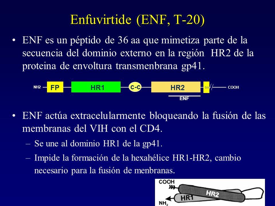 Enfuvirtide (ENF, T-20) ENF es un péptido de 36 aa que mimetiza parte de la secuencia del dominio externo en la región HR2 de la proteina de envoltura