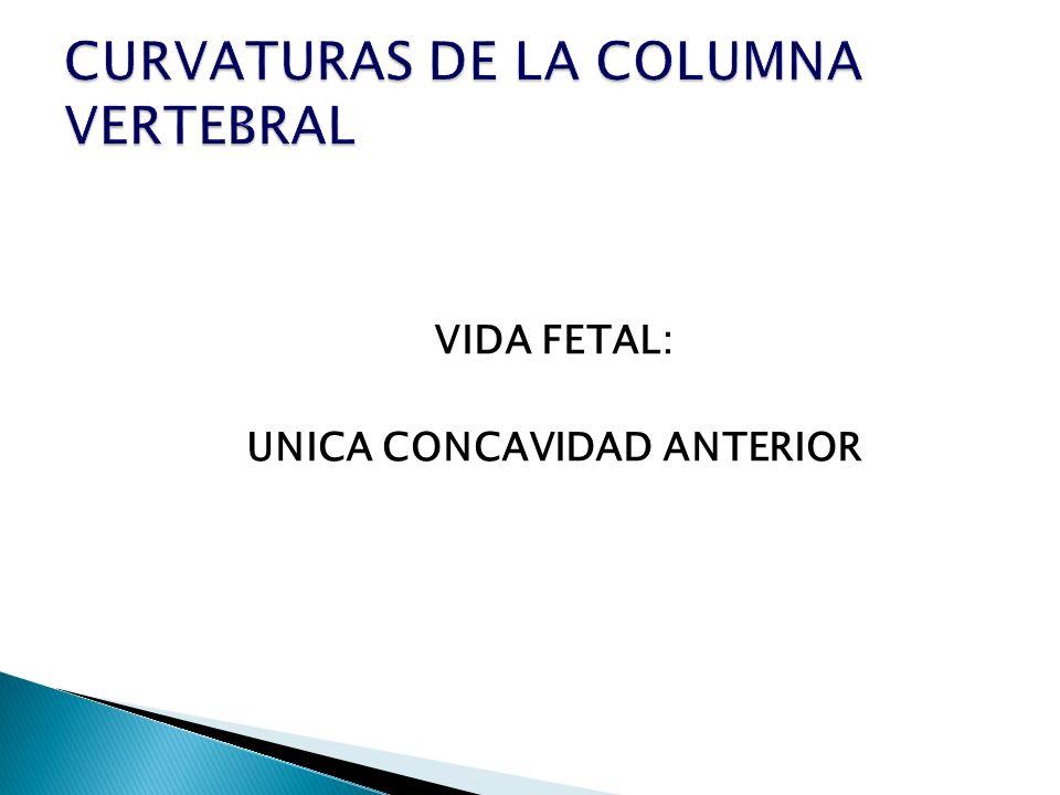 VIDA FETAL: UNICA CONCAVIDAD ANTERIOR