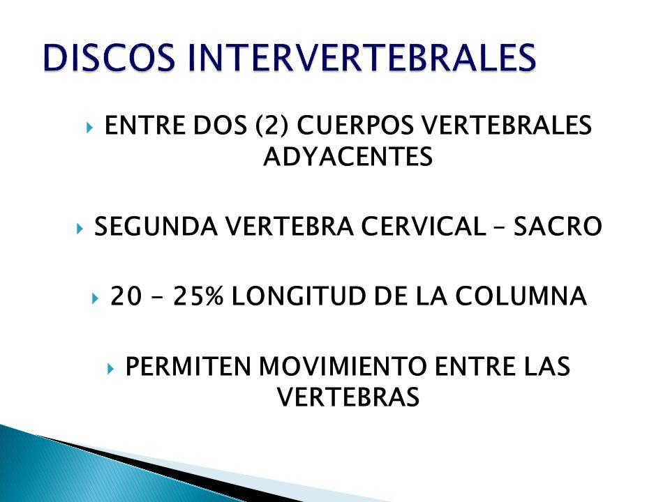 ENTRE DOS (2) CUERPOS VERTEBRALES ADYACENTES SEGUNDA VERTEBRA CERVICAL – SACRO 20 – 25% LONGITUD DE LA COLUMNA PERMITEN MOVIMIENTO ENTRE LAS VERTEBRAS