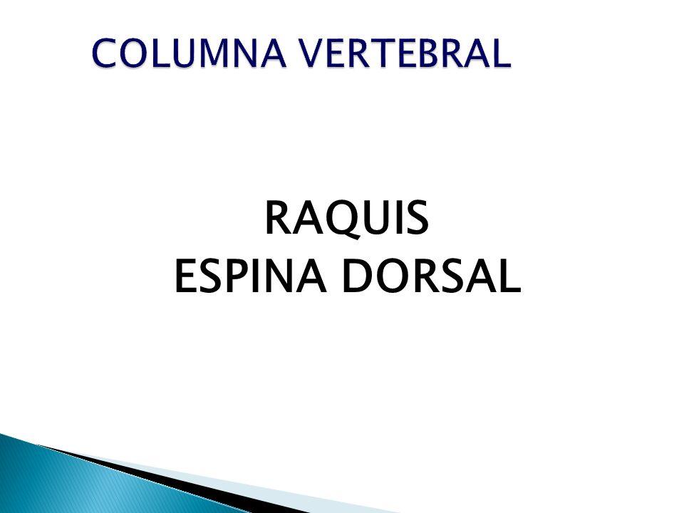 RAQUIS ESPINA DORSAL