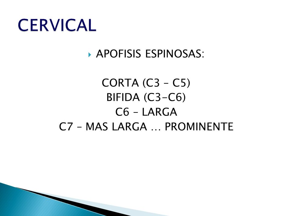 APOFISIS ESPINOSAS: CORTA (C3 – C5) BIFIDA (C3-C6) C6 – LARGA C7 – MAS LARGA … PROMINENTE