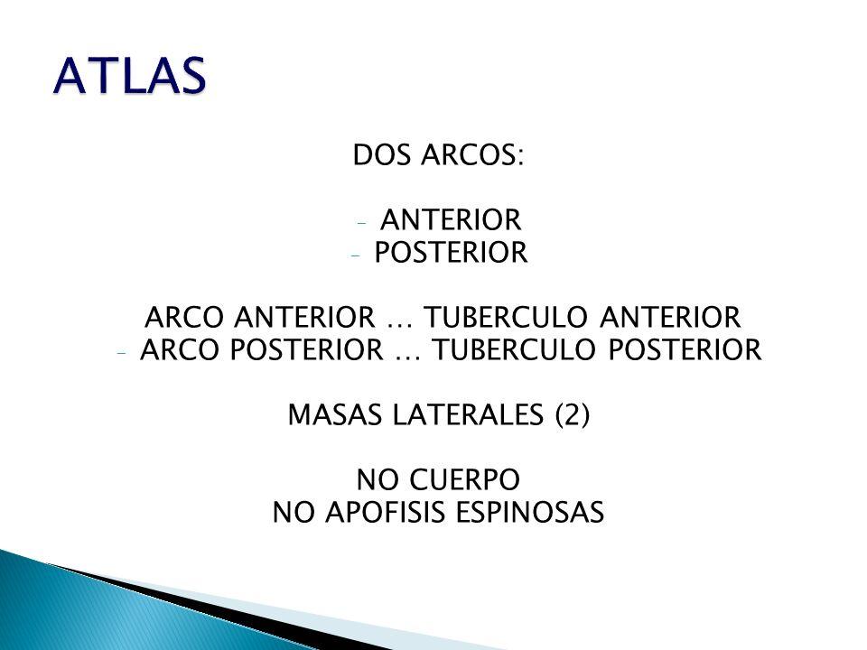 DOS ARCOS: - ANTERIOR - POSTERIOR ARCO ANTERIOR … TUBERCULO ANTERIOR - ARCO POSTERIOR … TUBERCULO POSTERIOR MASAS LATERALES (2) NO CUERPO NO APOFISIS