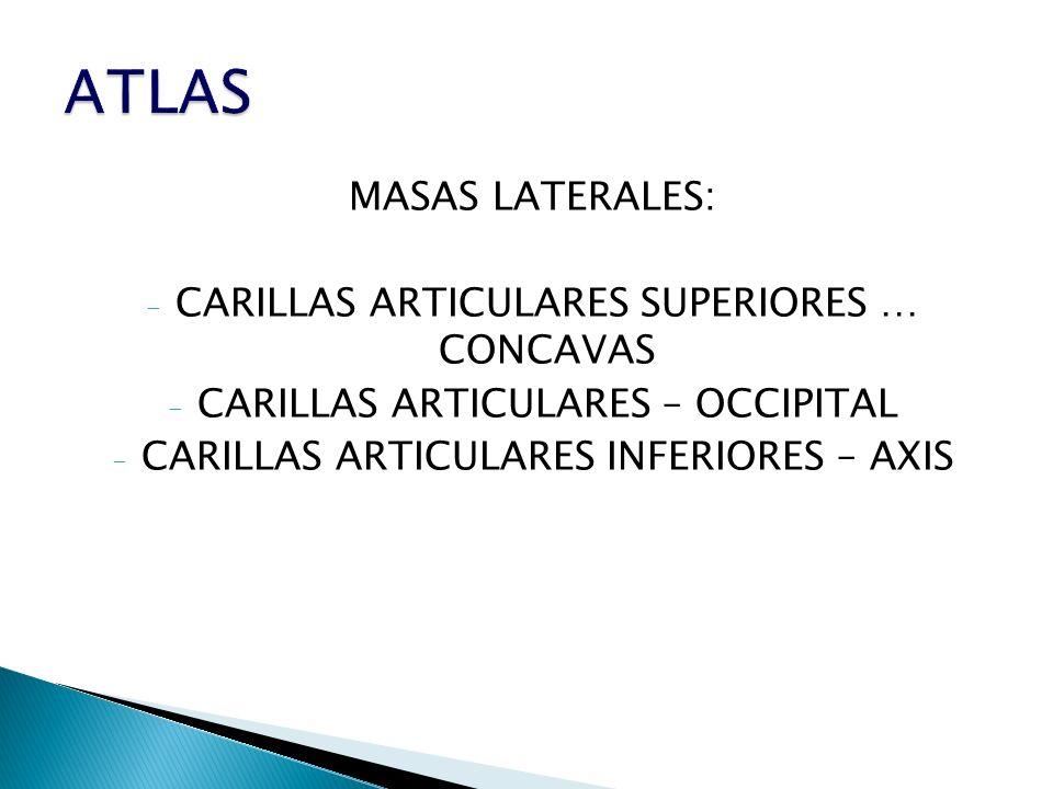 MASAS LATERALES: - CARILLAS ARTICULARES SUPERIORES … CONCAVAS - CARILLAS ARTICULARES – OCCIPITAL - CARILLAS ARTICULARES INFERIORES – AXIS