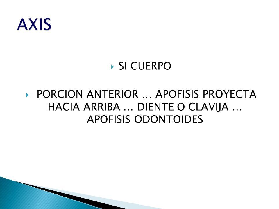SI CUERPO PORCION ANTERIOR … APOFISIS PROYECTA HACIA ARRIBA … DIENTE O CLAVIJA … APOFISIS ODONTOIDES