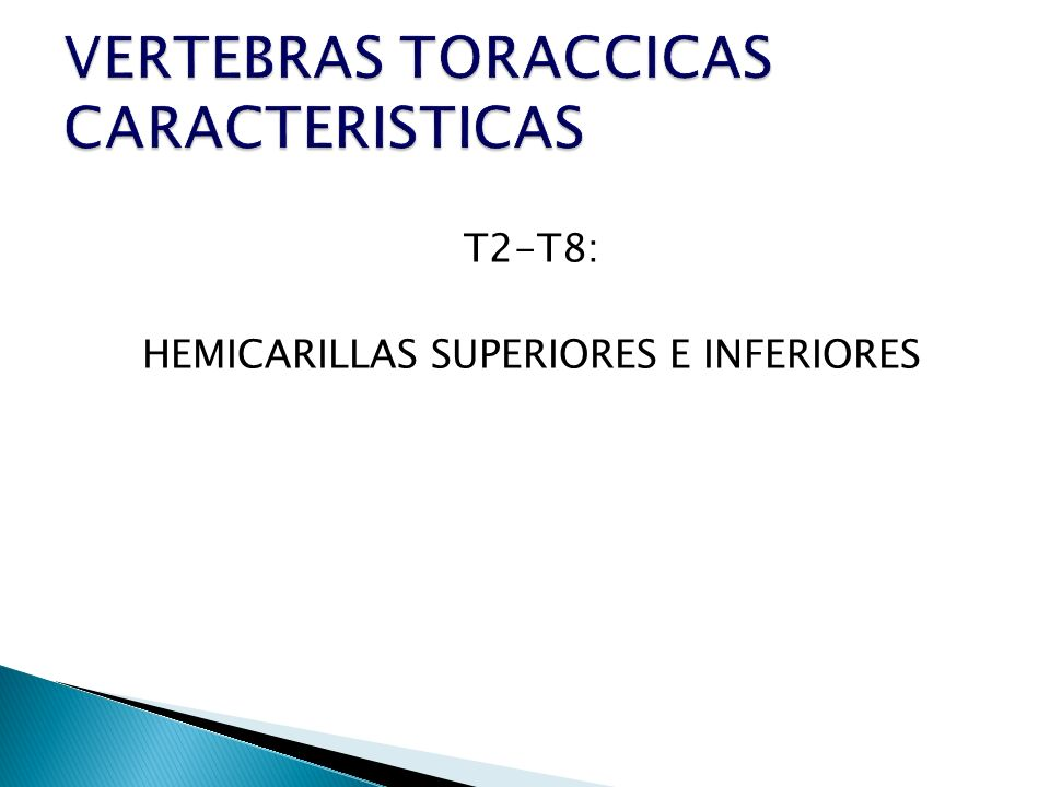 T2-T8: HEMICARILLAS SUPERIORES E INFERIORES