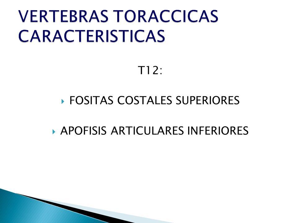 T12: FOSITAS COSTALES SUPERIORES APOFISIS ARTICULARES INFERIORES