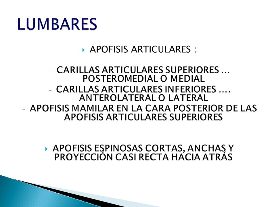 APOFISIS ARTICULARES : - CARILLAS ARTICULARES SUPERIORES … POSTEROMEDIAL O MEDIAL - CARILLAS ARTICULARES INFERIORES …. ANTEROLATERAL O LATERAL - APOFI