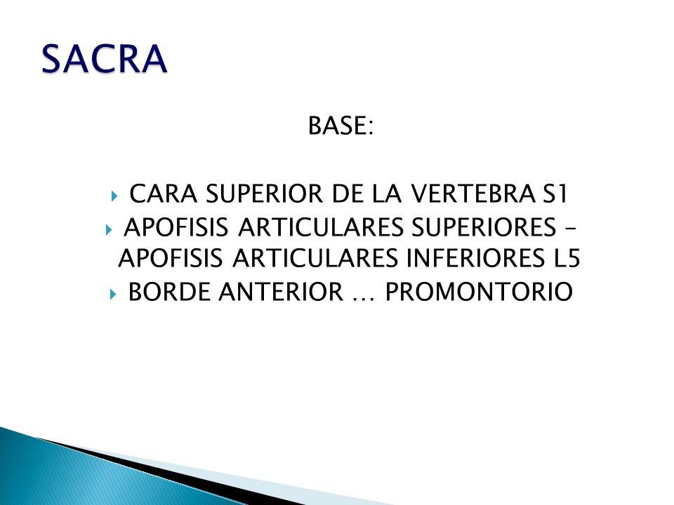 BASE: CARA SUPERIOR DE LA VERTEBRA S1 APOFISIS ARTICULARES SUPERIORES – APOFISIS ARTICULARES INFERIORES L5 BORDE ANTERIOR … PROMONTORIO