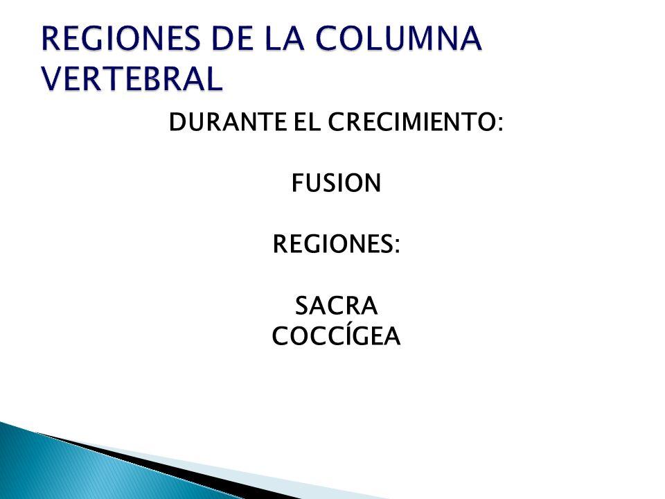 DURANTE EL CRECIMIENTO: FUSION REGIONES: SACRA COCCÍGEA