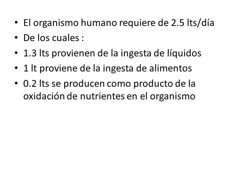 El organismo humano requiere de 2.5 lts/día De los cuales : 1.3 lts provienen de la ingesta de líquidos 1 lt proviene de la ingesta de alimentos 0.2 l