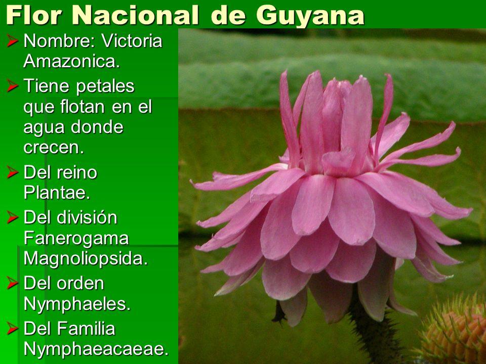 Nombre: Victoria Amazonica. Nombre: Victoria Amazonica. Tiene petales que flotan en el agua donde crecen. Tiene petales que flotan en el agua donde cr