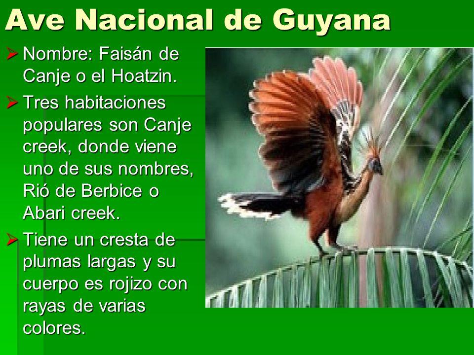 Ave Nacional de Guyana Nombre: Faisán de Canje o el Hoatzin. Nombre: Faisán de Canje o el Hoatzin. Tres habitaciones populares son Canje creek, donde