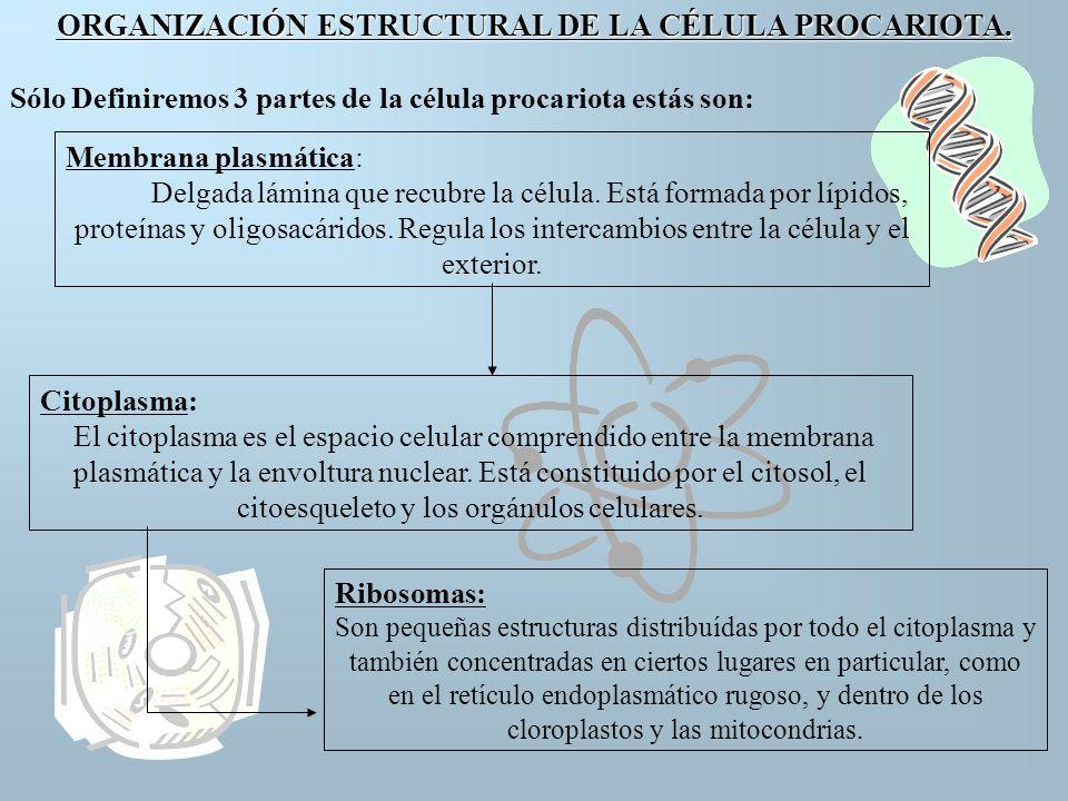 CÉLULA EUCARIOTA ANIMAL Estructura de una Célula Animal 1.