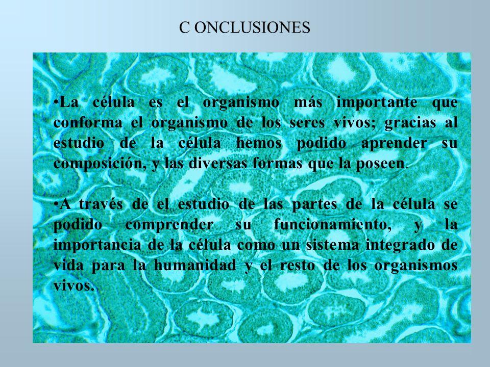 C ONCLUSIONES La célula es el organismo más importante que conforma el organismo de los seres vivos; gracias al estudio de la célula hemos podido apre