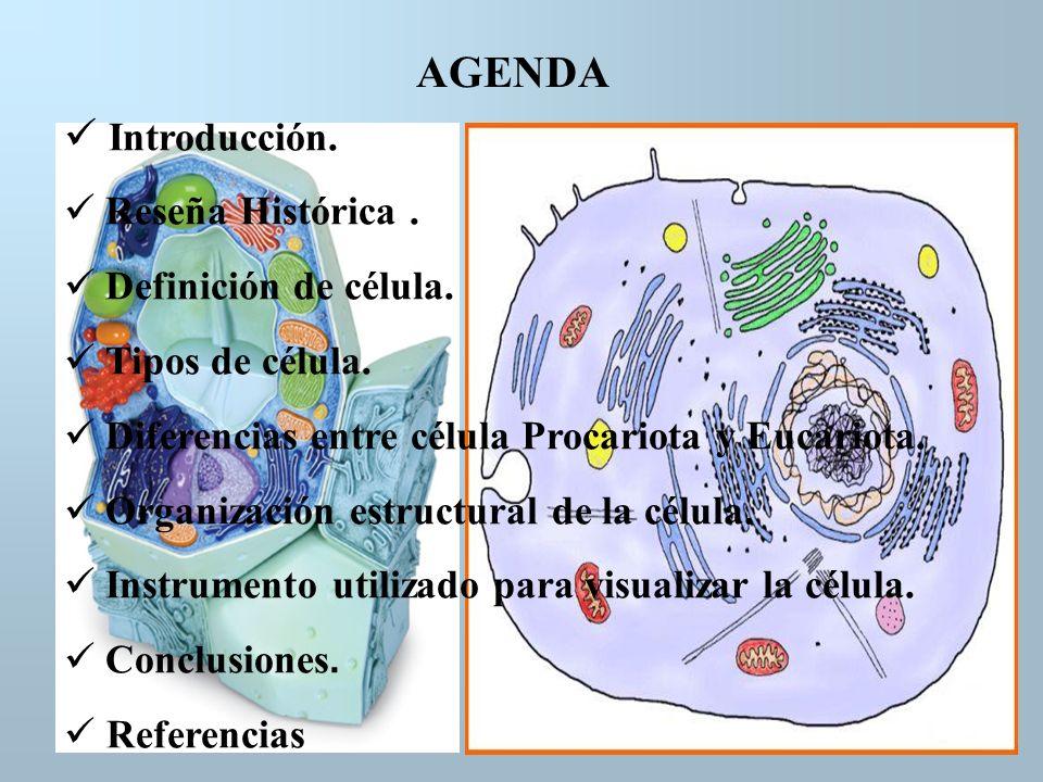 AGENDA Introducción. Reseña Histórica. Definición de célula. Tipos de célula. Diferencias entre célula Procariota y Eucariota. Organización estructura