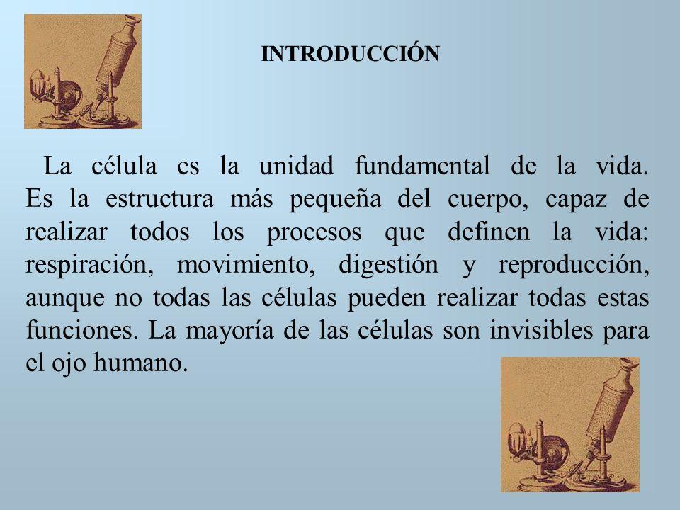 RESEÑA HISTÓRICA ROBERT HOOKE (1665) Con sus observaciones postuló el nombre célula para referirse a los compartimentos que encontró en un pedazo de corcho, al observar al microscopio ANTON VAN LEEUWENHOEK (1673) Realizó observaciones de microorganismos de charcas, eritrocitos humanos, espermatozoides.