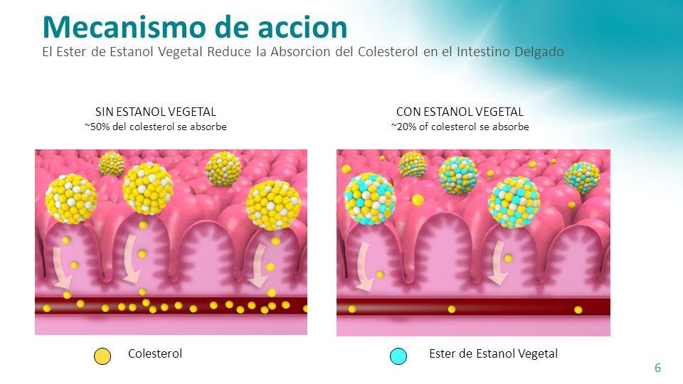 Mecanismo de accion El Ester de Estanol Vegetal Reduce la Absorcion del Colesterol en el Intestino Delgado 6 ColesterolEster de Estanol Vegetal SIN ESTANOL VEGETAL ~50% del colesterol se absorbe CON ESTANOL VEGETAL ~20% of colesterol se absorbe