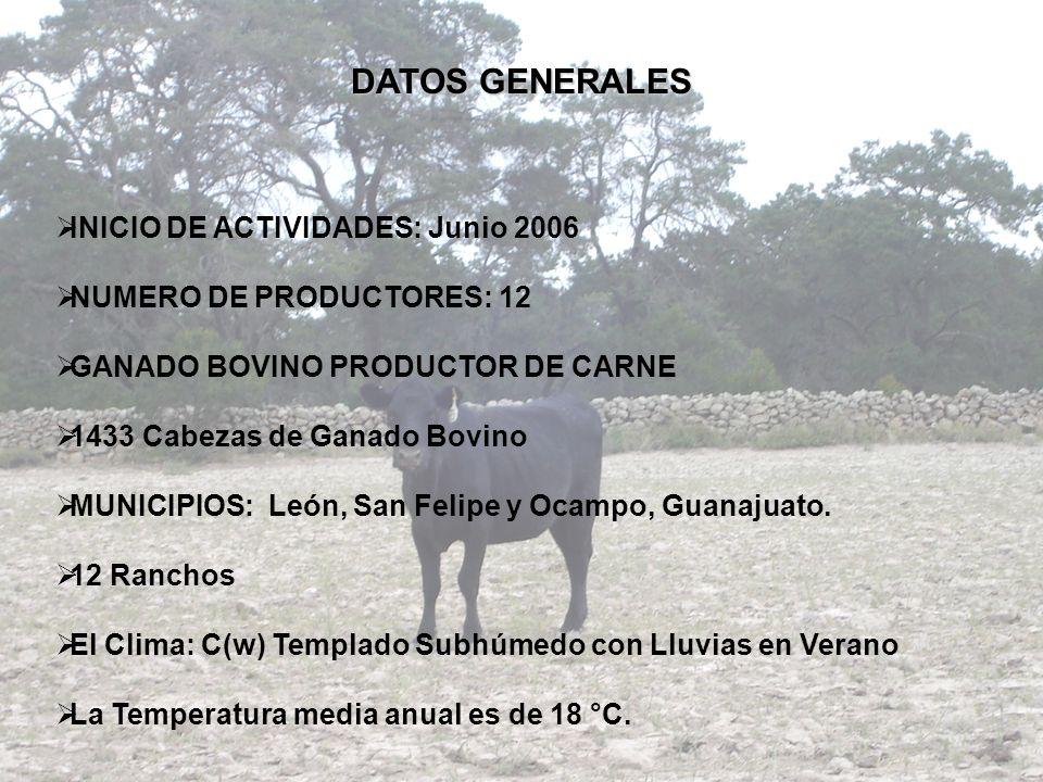 DATOS GENERALES INICIO DE ACTIVIDADES: Junio 2006 NUMERO DE PRODUCTORES: 12 GANADO BOVINO PRODUCTOR DE CARNE 1433 Cabezas de Ganado Bovino MUNICIPIOS: