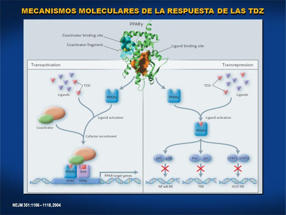 NEJM 351:1106 – 1118, 2004 MECANISMOS MOLECULARES DE LA RESPUESTA DE LAS TDZ