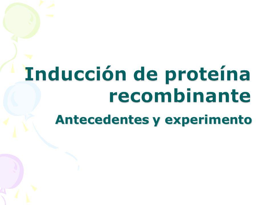 No transcripción del TRANSGENE: Cuando al sintetizarse la proteína represora (lac repressor) va y se une a la región del operador.