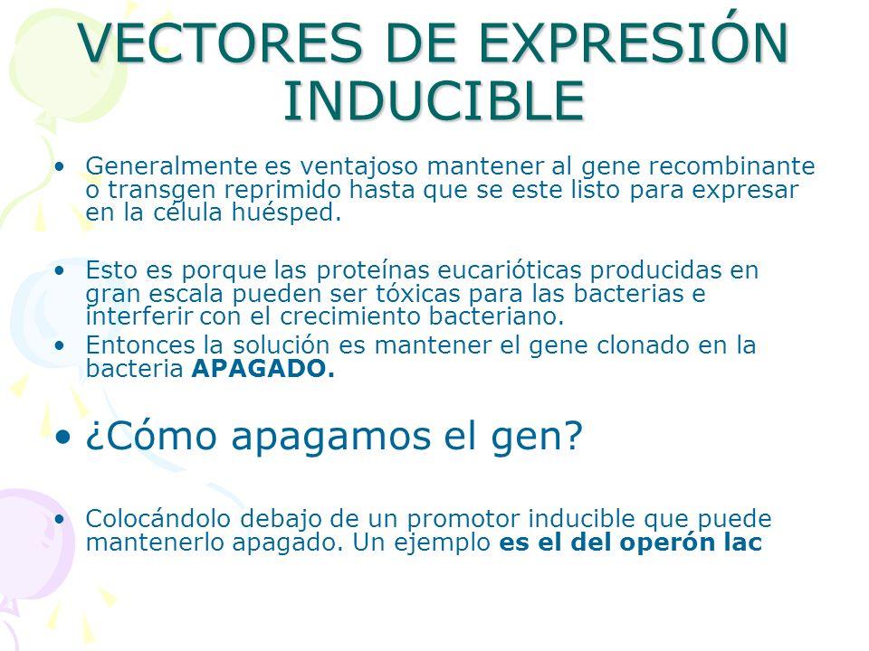 VECTORES DE EXPRESIÓN INDUCIBLE Generalmente es ventajoso mantener al gene recombinante o transgen reprimido hasta que se este listo para expresar en