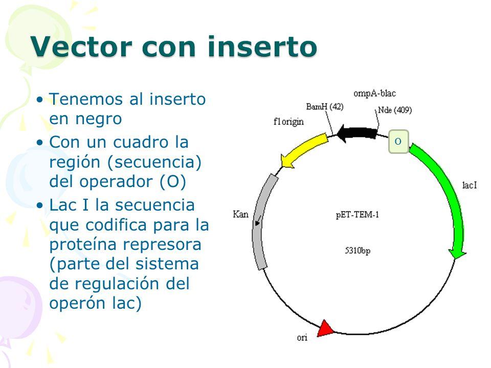 Tenemos al inserto en negro Con un cuadro la región (secuencia) del operador (O) Lac I la secuencia que codifica para la proteína represora (parte del