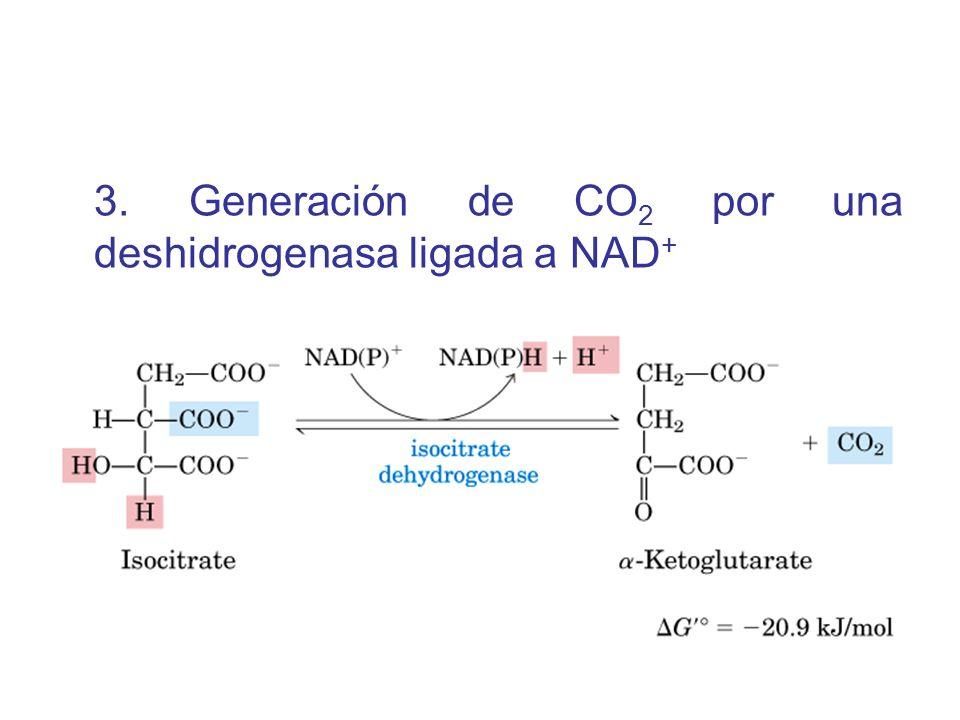 3. Generación de CO 2 por una deshidrogenasa ligada a NAD +