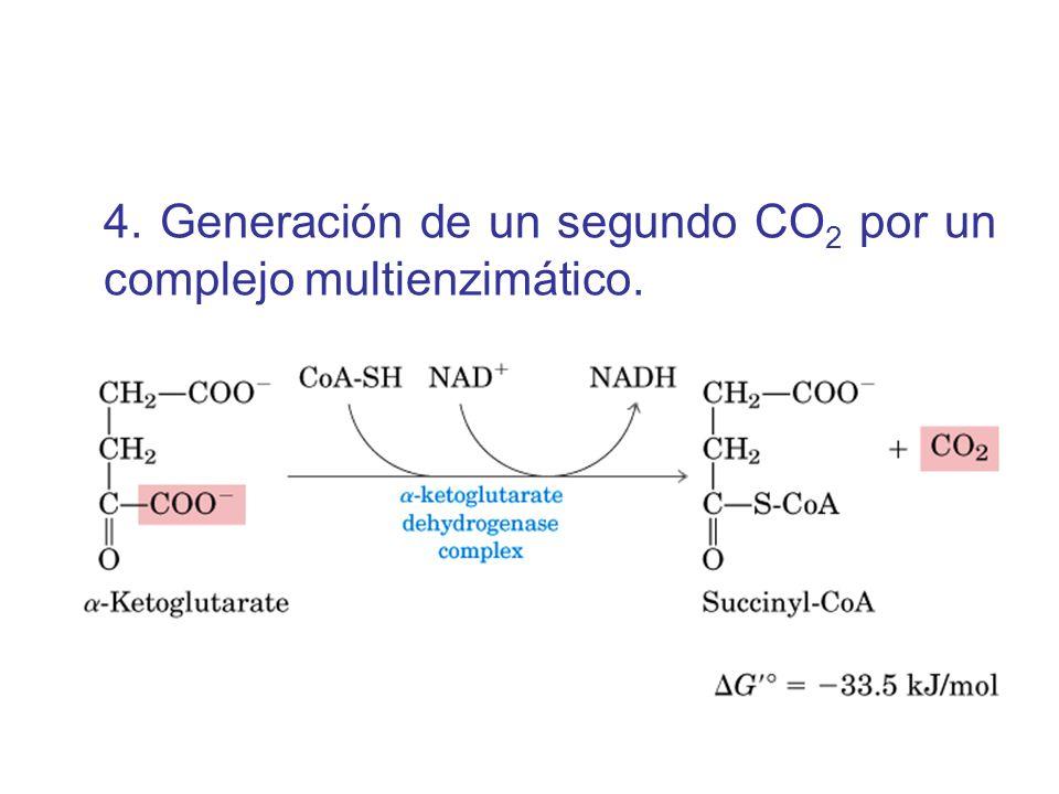 4. Generación de un segundo CO 2 por un complejo multienzimático.