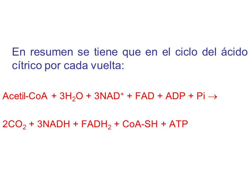 En resumen se tiene que en el ciclo del ácido cítrico por cada vuelta: Acetil-CoA + 3H 2 O + 3NAD + + FAD + ADP + Pi 2CO 2 + 3NADH + FADH 2 + CoA-SH + ATP