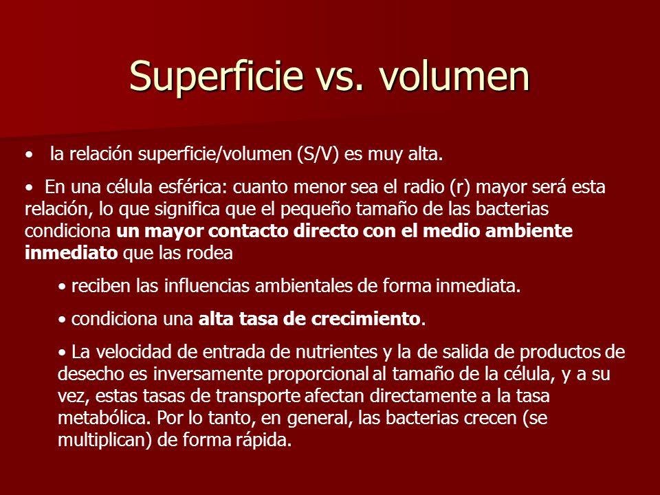 Superficie vs.volumen la relación superficie/volumen (S/V) es muy alta.