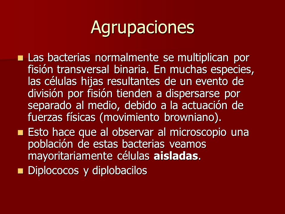 Agrupaciones Las bacterias normalmente se multiplican por fisión transversal binaria.