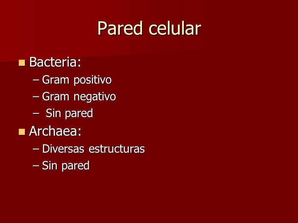 Pared celular Bacteria: Bacteria: –Gram positivo –Gram negativo – Sin pared Archaea: Archaea: –Diversas estructuras –Sin pared