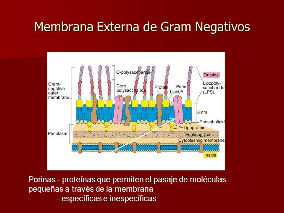 Membrana Externa de Gram Negativos Porinas - proteínas que permiten el pasaje de moléculas pequeñas a través de la membrana - específicas e inespecíficas
