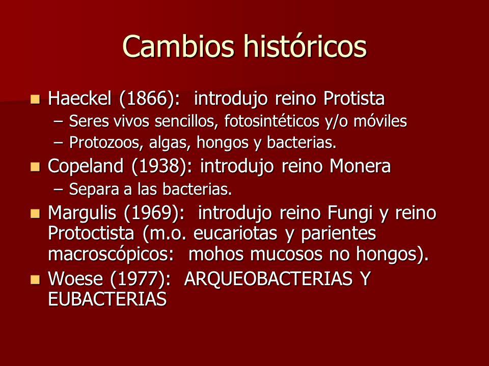 Cambios históricos Haeckel (1866): introdujo reino Protista Haeckel (1866): introdujo reino Protista –Seres vivos sencillos, fotosintéticos y/o móviles –Protozoos, algas, hongos y bacterias.