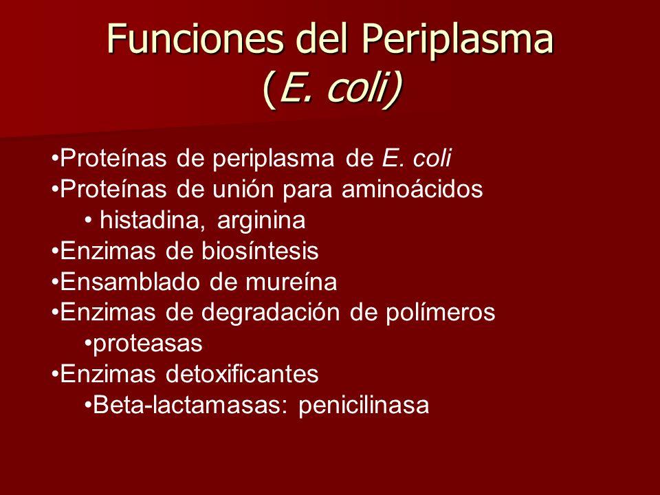 Funciones del Periplasma (E.coli) Proteínas de periplasma de E.